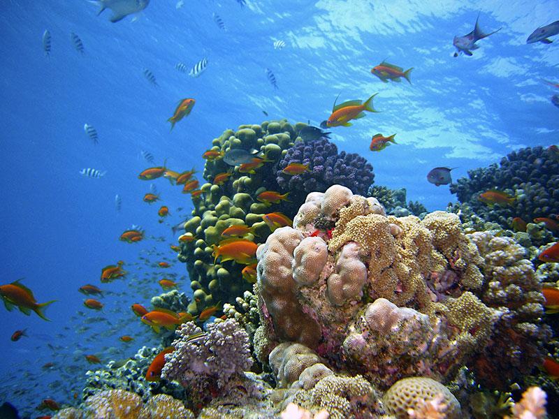 Understanding The Survival Of Living corals: Quantum leaps
